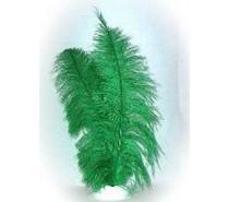 Veer spadonis: Groen ± 50 cm