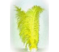 Veer spadonis: Geel ± 50 cm