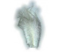 Floss Veer: Wit ± 30 cm